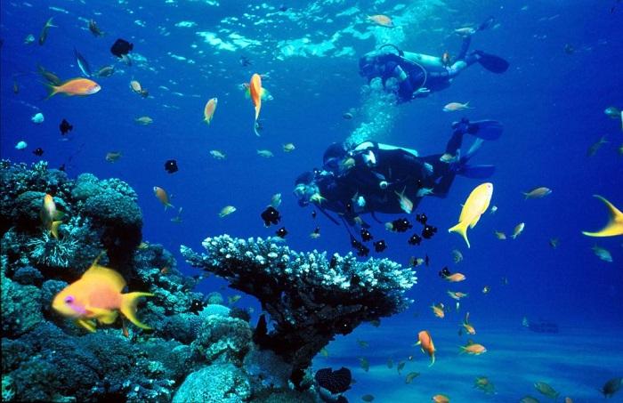 Cham Island Snorkeling Tour